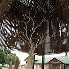 Barcaldine,Queensland,Australia 2016-Tree Of Knowledge by muz2142