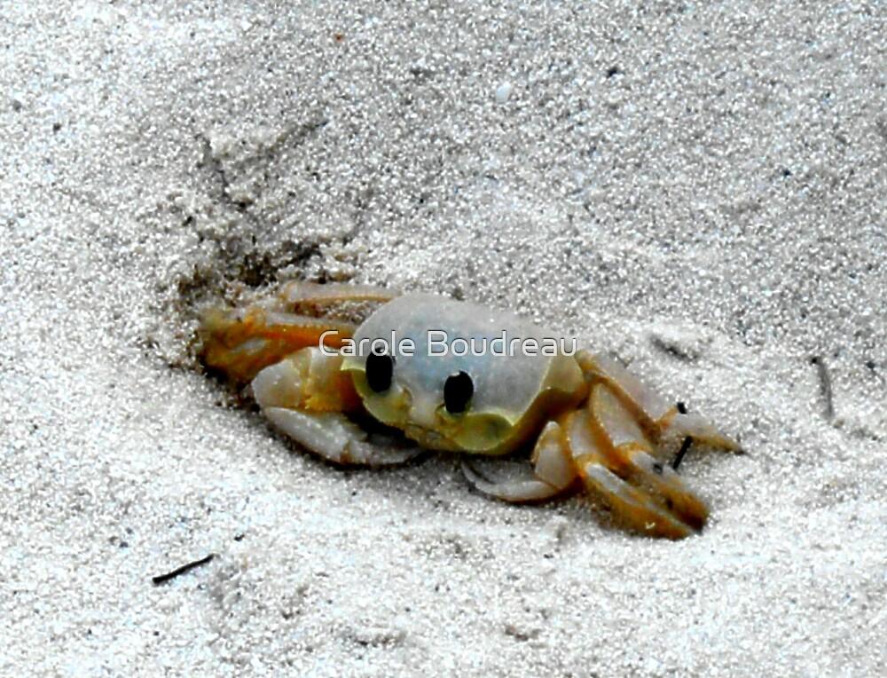Black Eyed Sand Crab by Carole Boudreau