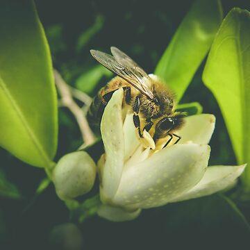 Honey & Lemon by CelestaDarkide