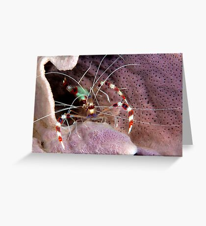 Banded Cleaners Greeting Card