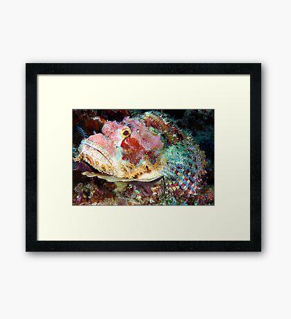 Smallscale Scorpionfish Framed Print