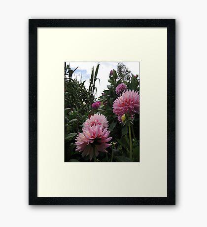 Perfume Of Pinks Framed Print