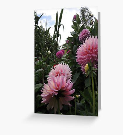 Perfume Of Pinks Greeting Card