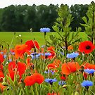 Poppies And Cornflowers by taiche