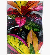 Shinjuku Gyoen: Funky Foliage Poster