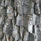 Cottonwood Bark by kennedywesley