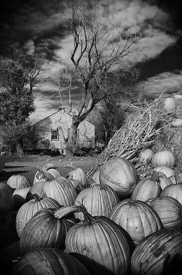Pumpkin Patch Hwy14 by johnny gomez