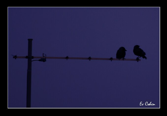 Birds by EvCohen