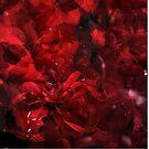 Rosa Plenteous 1 by Pekka Nikrus