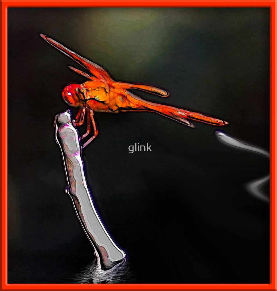 Dragonfly by glink
