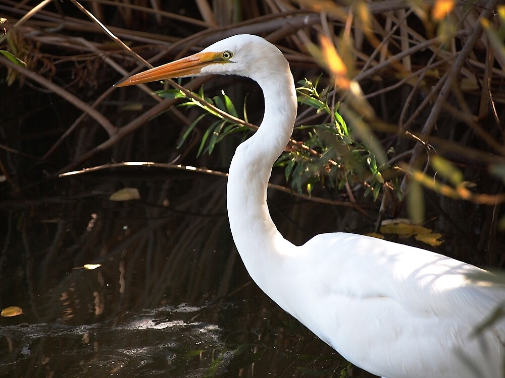Egret at Sepulveda Basin Wildlife Reserve by Douglas E.  Welch