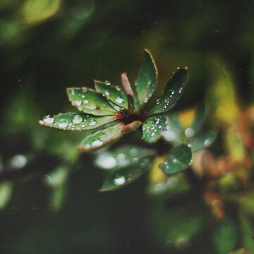 Autumn Rain by christinevanfon