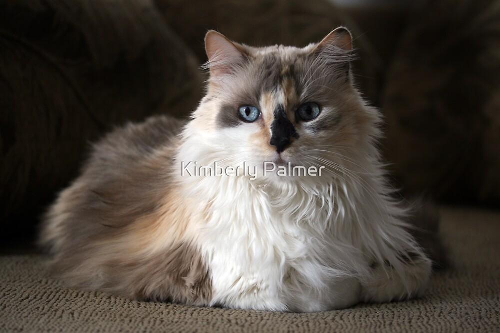 Mia the kitty by Kimberly Palmer