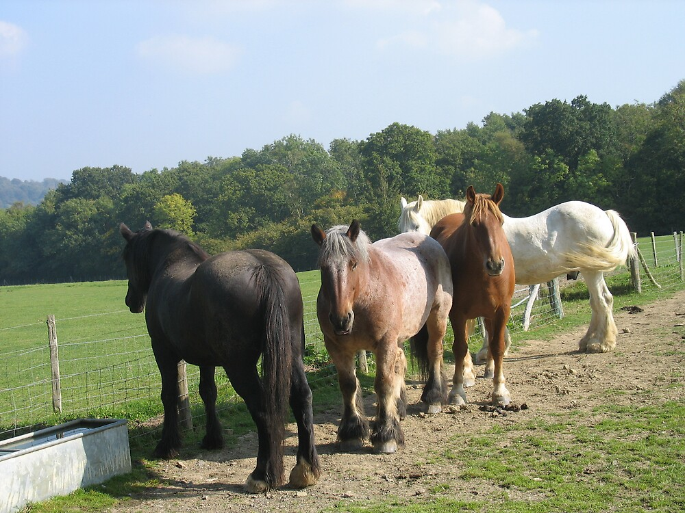 Members of The Heavy Horse Trust by s1mbo