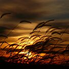 Blowing in the wind by kentuckyblueman