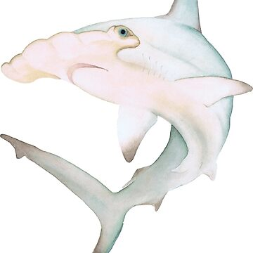 Pastel Watercolor Hammerhead Shark by thecuriouswild