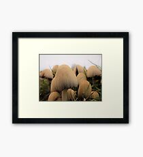 Unknown Mushrooms Up-close  Framed Print