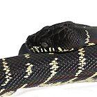 Draven, the Boelen's Python by Merryeli Reptiles