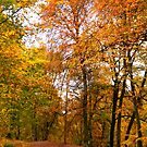 ~ Autumn woods ~ by M S Photography/Art