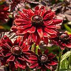 Cherry Brandy by PhotosByHealy