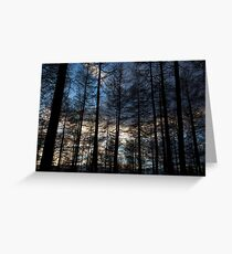 sunset, countesswells woods Greeting Card
