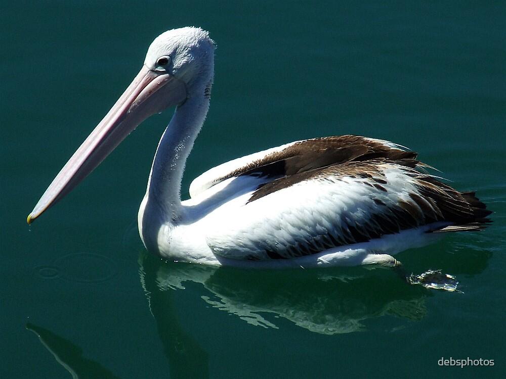 """Paddling Pelican"" by debsphotos"