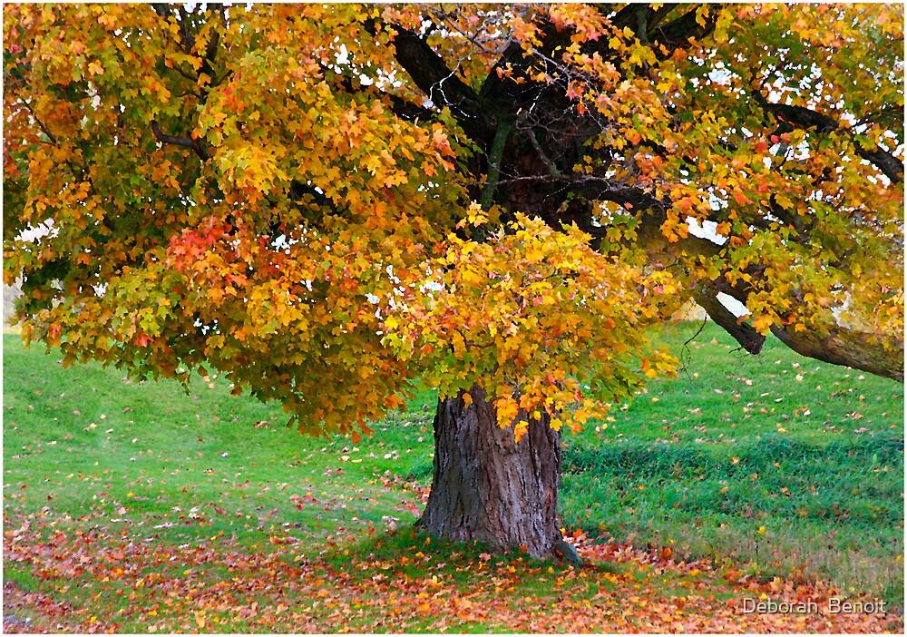 Falling Leaves by Deborah  Benoit