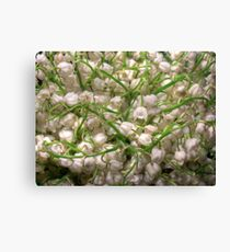 Lilies of the valley 5 Canvas Print