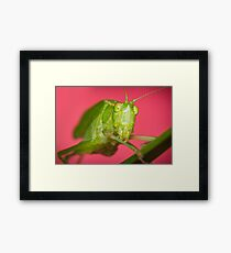 Fork-Tailed Bush Katydid Framed Print