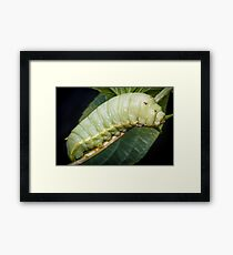 Large Green Caterpillar Framed Print
