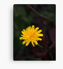 Yellow Flower - Photography Canvas Print