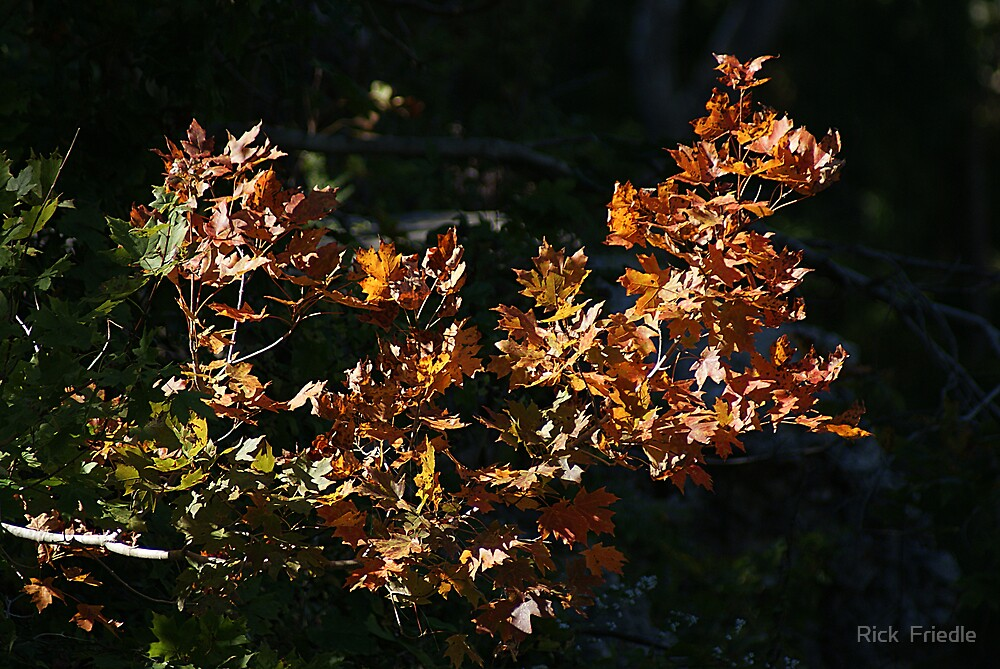 A Touch Of Autumn by Rick  Friedle