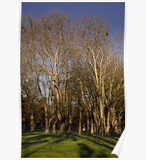Fitzroy gardens Poster