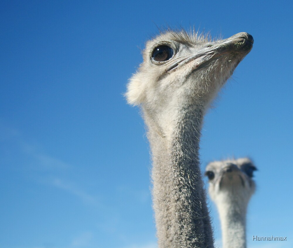 Ostrich Inspiration by Hannahmax