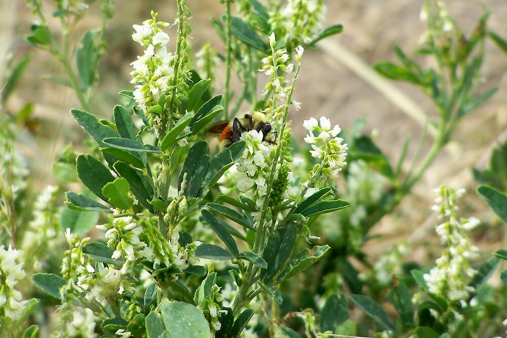 Bumble Bee by pamela11