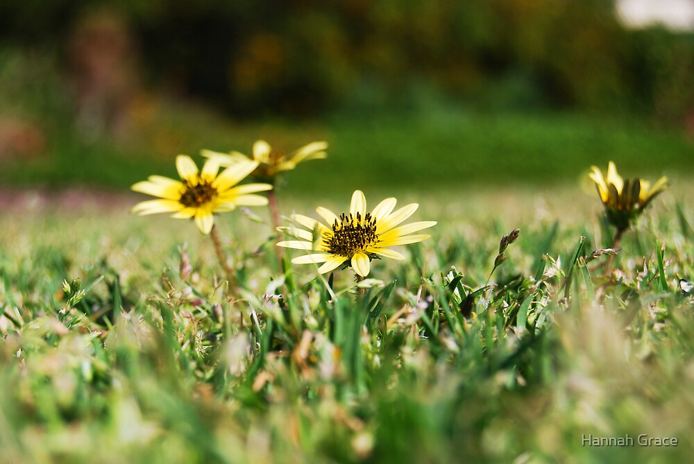 Yellow Wild Flowers by Hannah Grace