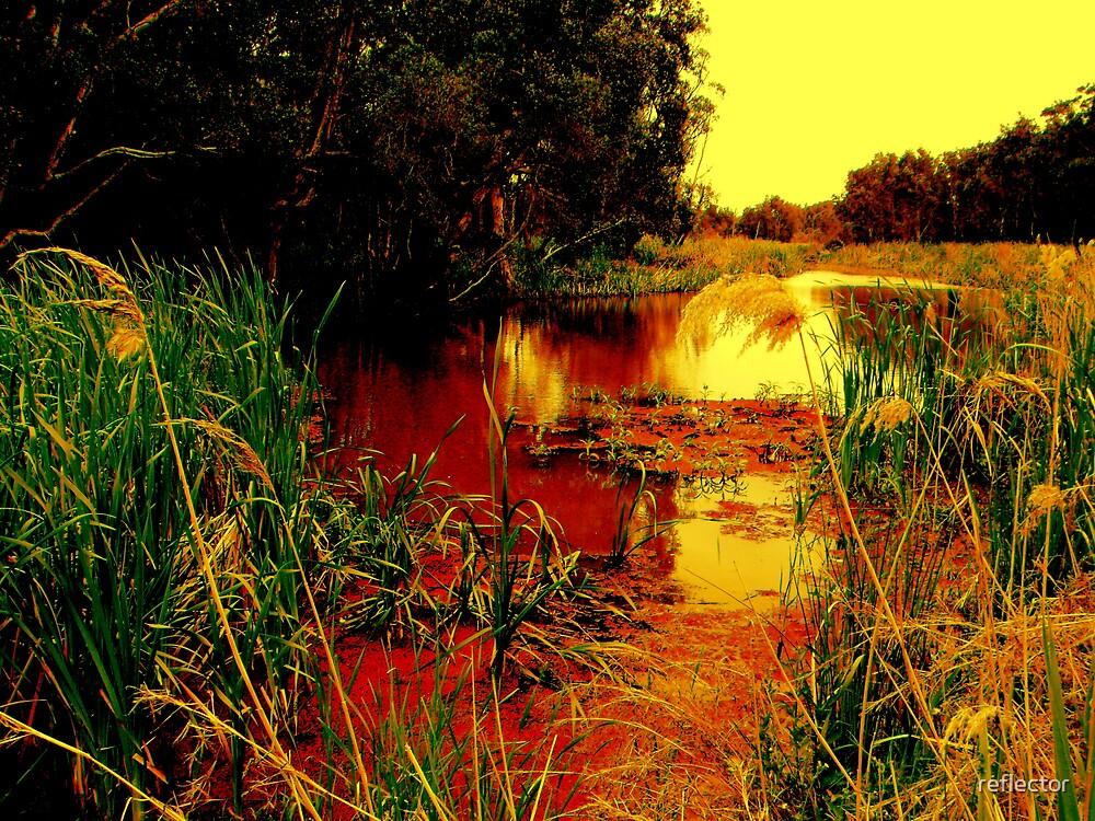 Coastal Wetlands by reflector