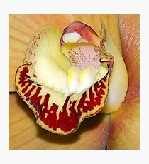 Heart of the Orchid - Derdrochillum Wenzellii 'Red' Photographic Print
