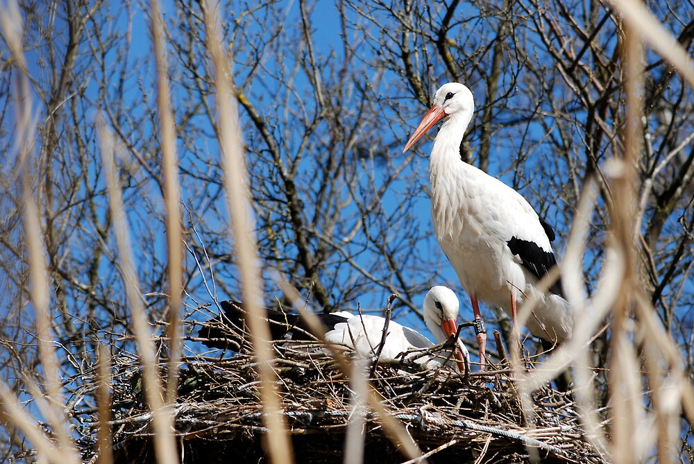 stork couple by mc27
