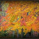 Autumn, Naturally by Deb  Badt-Covell