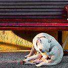 Mans Best Friend by Deyne Foster
