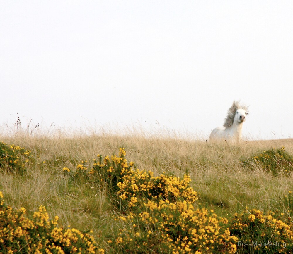 Free as the Wind by RosaMarieAshby