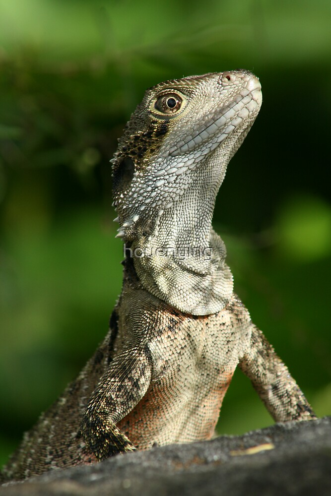 lizard by houenying