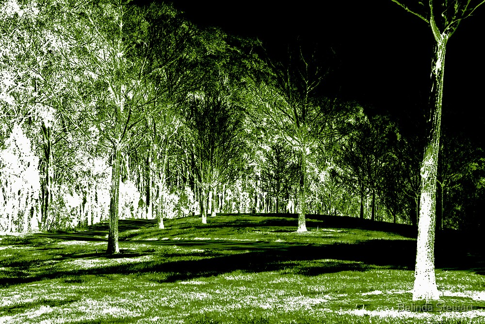 The Trees by Belinda Stewart