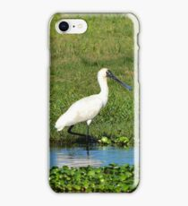 Royal Spoonbill iPhone Case/Skin