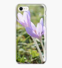 Colchicum autumnale, autumn crocus, meadow saffron iPhone Case/Skin