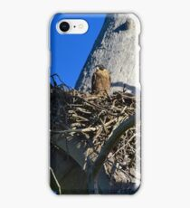 Baby Peregrine iPhone Case/Skin