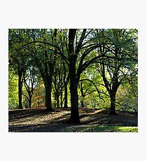 Shadow, Sun, Green Photographic Print