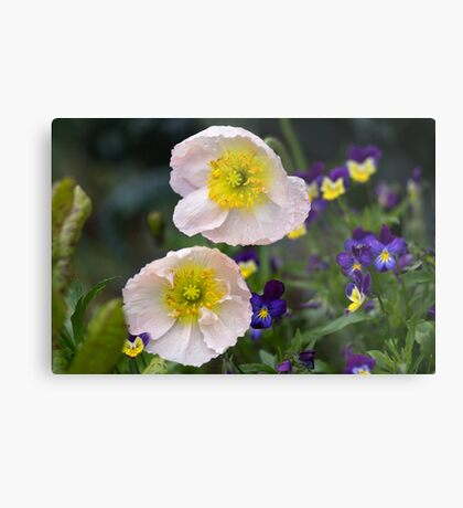 Poppies come in Twos Metal Print