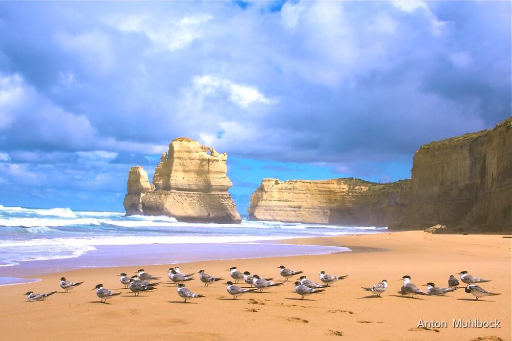 12 Apostels Victoria ( Australia ) by Anton  Muhlbock